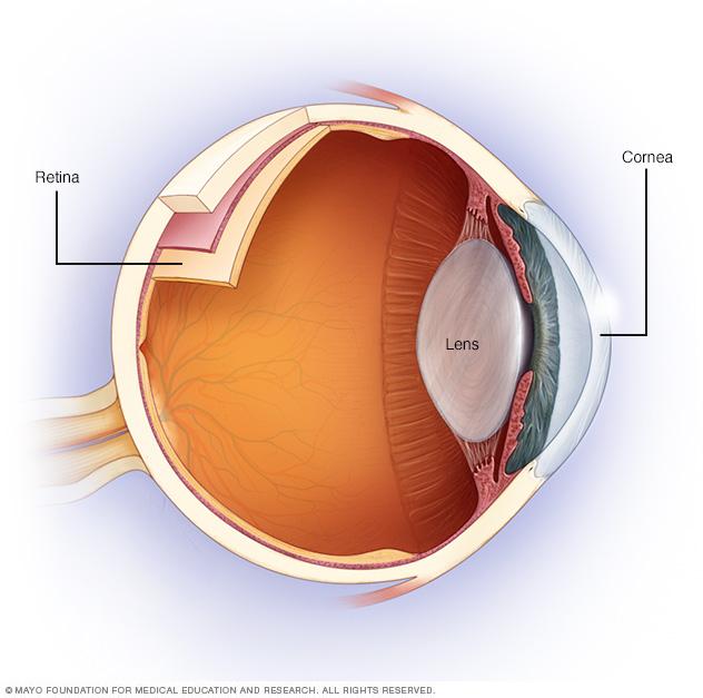 Simplified anatomy of the eye